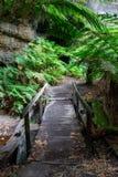 Le felci e le pareti di canyon alla lucciola di Lithgow scavano una galleria in Immagine Stock