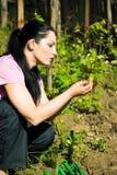 Le femme contrôlant la première vigne part au printemps Photographie stock libre de droits