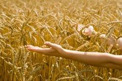 Le femme donnant arme vers le blé Photographie stock libre de droits