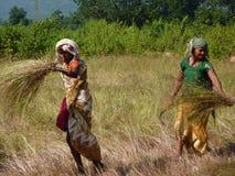 Le femme indien utilise une faucille image stock