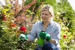 Le femme mûr s'occupent de son jardin Photos stock