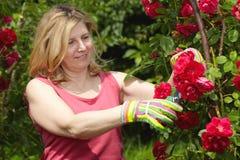 Le femme mûr s'occupent de son jardin Image stock
