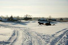 Le fermier porte le foin sur un cheval Photos stock