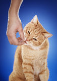 Le festin du chat image stock