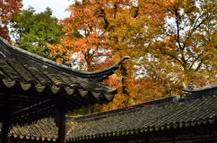 Le festival d'érable rouge de Tianpinghill à Suzhou, Chine Images stock