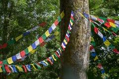 Le festival d'arbre de Larmer, Tollard royal, WILTSHIRE, R-U Photo stock