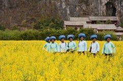 Le festival des fleurs de chou Photo stock