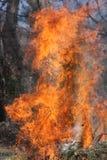 Le feu photo libre de droits