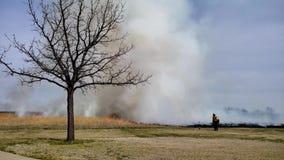 Le feu d'herbe a prescrit la brûlure pour la restauration de prairie avec le sapeur-pompier et l'arbre dans le premier plan banque de vidéos