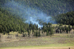 Le feu dans la forêt Photos stock