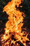 Le feu dans la forêt Images stock