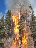 Le feu dans la forêt photographie stock libre de droits