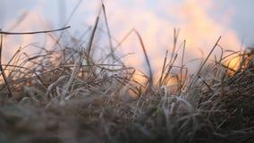 Le feu dans la forêt et la campagne, herbe sèche brûlante, arbres, meules de foin avec de la fumée caustique clips vidéos
