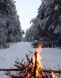 Le feu dans la forêt d'hiver Photo libre de droits