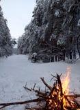 Le feu dans la forêt d'hiver Image libre de droits