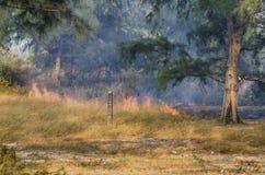 Le feu dans les bois Photographie stock