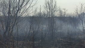 Le feu dans les bois avec de la fumée forte clips vidéos