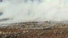 Le feu dans les bois avec de la fumée forte banque de vidéos