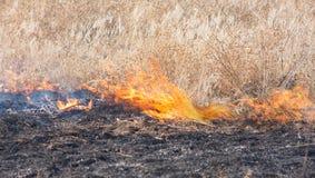 Le feu dans un domaine Photo stock