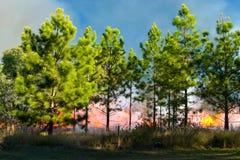 Le feu de brousse 3 Photo libre de droits
