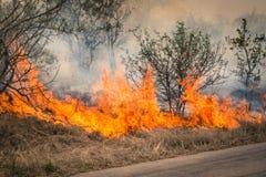 Le feu de brousse brûlant au parc de Kruger en Afrique du Sud Photo stock
