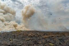 le feu de brousse commandé en parc national de Kakadu, avec différents oiseaux, territoire du nord, Australie photos stock
