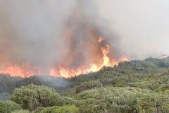 Le feu de brousse de plage de Prevelly Images libres de droits