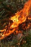 Le feu de Bush dans l'Australie Photographie stock libre de droits