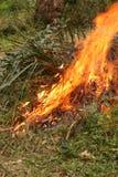 Le feu de Bush dans l'Australie Photo libre de droits