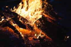 Le feu de camp la nuit dans la forêt Images stock