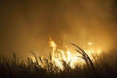 Le feu de canne à sucre Photographie stock