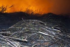 Le feu de canne à sucre Photographie stock libre de droits