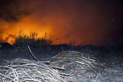 Le feu de canne à sucre Images stock