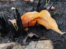 Le feu de champ ensuite photos libres de droits