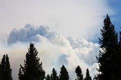 Le feu de forêt énorme dans le paysage sec de forêt Photo libre de droits