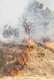 Le feu de forêt Photographie stock libre de droits