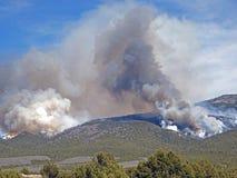 Le feu de forêt Images stock