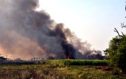 Le feu de forêt brûlé de canne près de la route Images stock