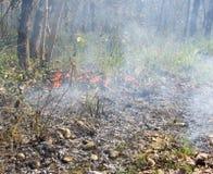 Le feu de forêt dans Chitwan, Népal Images stock