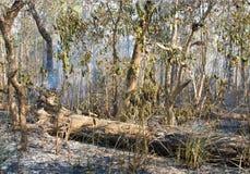 Le feu de forêt dans Chitwan, Népal Photos libres de droits