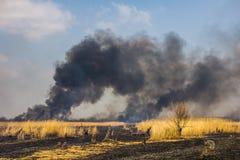 Le feu de forêt dans le domaine avec l'herbe sèche Photographie stock