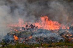 Le feu de forêt de Fynbos photographie stock
