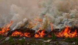 Le feu de forêt de Fynbos photos libres de droits