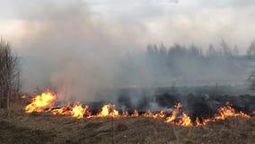 Le feu de forêt, incendie de forêt, le feu de champ clips vidéos