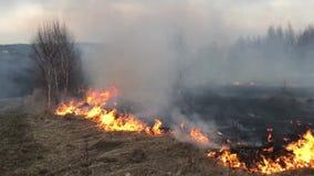 Le feu de forêt, incendie de forêt, le feu de champ banque de vidéos