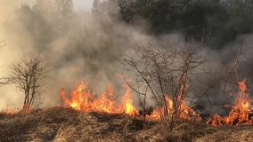 Le feu de forêt, incendie de forêt, le feu de champ, banque de vidéos