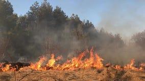Le feu de forêt, incendie de forêt, le feu de champ, clips vidéos
