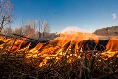 Le feu de forêt ou de champ l'arbre est brûlé à la terre beaucoup de feu quand vildfire Photos libres de droits