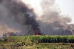 Le feu de forêt brûlé de canne près de la route Image stock