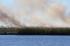 Le feu de marais Photographie stock